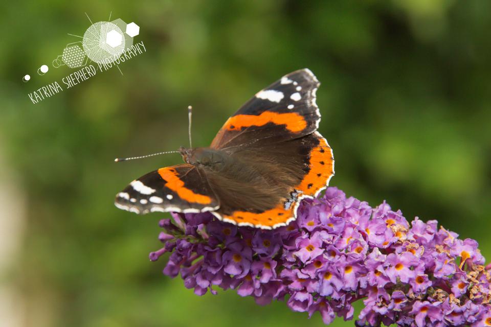 Summer's Last Hurrah – Butterflies & Bees