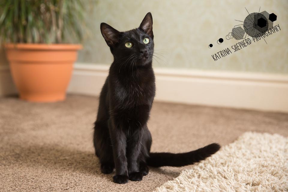 Luna & Alfie: Pet Photography at Home