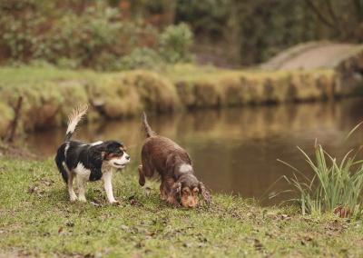 Blackburn pet photographer - Two dogs running alongside a stream